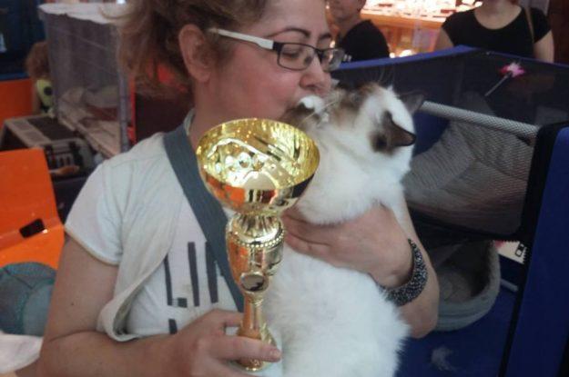 18-19.06.2016 – Międzynarodowa wystawa kotów Gliwice, Polska
